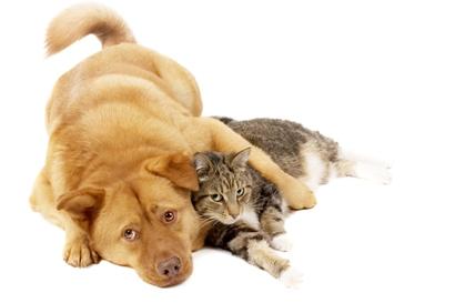 flea control dog and cat