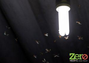 Termites White Ants Sunshine Coast