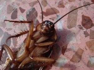 Home Protect Pest Management Plans